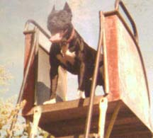 Chako on a slide in the early 80s